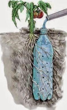 Para manter as plantas irrigadas
