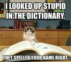 Grumpy Cat – Tap the link now to see all of our cool cat collections! Grumpy Cat – Tap the link now to see all of our cool cat collections! Grumpy Cat Quotes, Funny Grumpy Cat Memes, Funny Animal Jokes, Crazy Funny Memes, Really Funny Memes, Funny Relatable Memes, Funny Animal Pictures, Funny Cats, Funny Animals