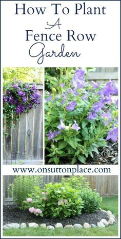 Find out the essential elements of a fence row garden. Tips for flower choices too!