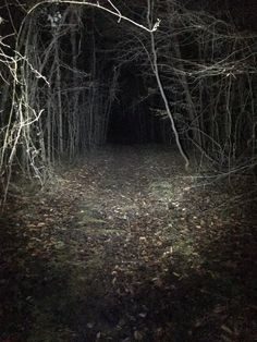 Like a scene out of slenderman - Misty Forest, Dark Forest, Scary Woods, Spooky Scary, Aesthetic Photo, Creepypasta, Halloween, Scene, Nature