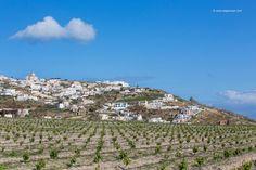 vineyards in Episkopi Gonia Thiras Sweet Wine, Santorini, City Photo, Vineyard, Nature, Travel, Life, Islands, Naturaleza