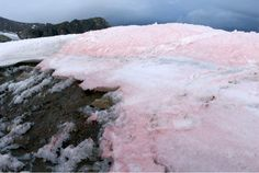 The Arctic's pretty but alarming strawberry-pink snow - The Washington Post