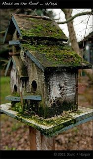 Judy's Cottage Garden: Birdhouses (would be a cool fairy house if doors/windows are different)