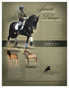 New ad for Andalusian Dressage Partners, just approved by the client, and will be appearing in Alliance Source Magazine. Her stallion, Noble GF (a Gaucho III son), is winning consistently at Fourth Level with the most very awesome Michael Etherly and also producing great foals.  www.AndalusianDressagePartners.com