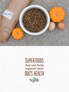 Wondering which real recognizable ingredients to look for when choosing a natural dog food? Here are a few that, when combined for complete nutrition and balanced with essential nutrients, can help support your dog's long-term health.