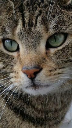 Precious! So like my sweet kitty who I'd gone now