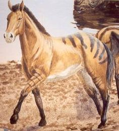 A true single-toed horse, Pliohippus roamed the grassy plains of North America about 12 million years ago, and may have survived into the Pliocene epoch. Although it closely resembled modern horses, there's some debate about whether the depressions in its skull, in front of its eyes, are evidence of a parallel branch in equine evolution.