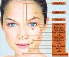 Yüz Çizgileri Hastalıklar Hakkında Kabaca Neler Söylüyo