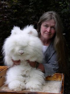 German rabbit                                                                                                                                                     More