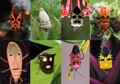 faces in bugs