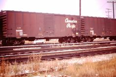 """two consecutively numbered 40' Canadian Pacific boxcars, CP 44180 and 44181.  Photo taken at Agincourt, Ontario on an unspecified 1975 day.  It is interesting that in spite of being recently renumbered into the 44xxx series they had not been repainted into the CP Rail """"Action Red"""" scheme."""