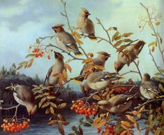 Ferdinand Henricsson von Wright — Bohemian Waxwings on a Rowan Wright Brothers, Ferdinand, Pictures To Paint, Science And Nature, Bird Art, Sculptures, Birds, Drawing, Finland