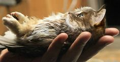 10  Unusual Cat And Bird Hybrids Bred In Photoshop (Add Yours)