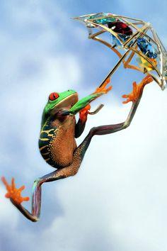 Happy Frog!  Animals iPhone Wallpaper | iDesign * iPhone