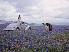 Travelers find wildflowers abundant along San Joaquin's Route 99.  Location:San Joaquin Valley, California.  Photographer:B. ANTHONY STEWART                                                                                                                                                                                 More