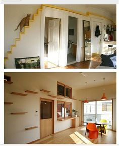 I really want to do something like this one day - cat shelves and high-up walkways all around my house to lots of beds, hideyholes and vantage points