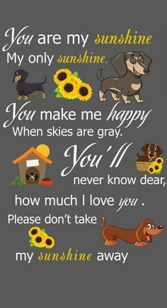 My sunshine is gone. Dachshund Art, Dachshund Gifts, Dachshund Puppies, Weenie Dogs, Daschund, Doggies, Dog Quotes, Animal Quotes, I Love Dogs