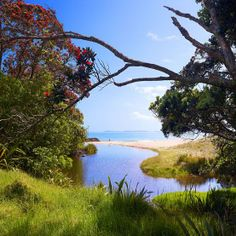 Peter Latham - When I Was Young. Location Rings Beach Coromandel Peninsular