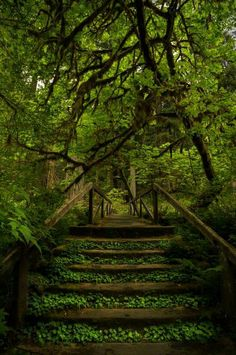 Redwoods trail, California