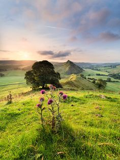 Chrome Hill and Parkhouse Hill at sunrise - Peak District, England by Stephen Elliott