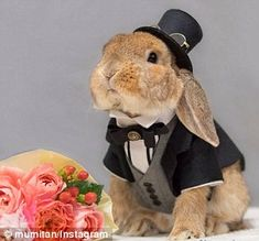 Symbol:The bunny has also had a starring role in the promotion of Sydney's first ever bunny cafe in Melbourne