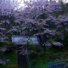Morning (Iwaki, Fukushima, JAPAN/2012.04)