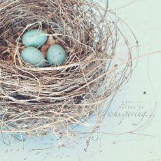 53 New ideas bird nest tattoo robins egg Bird Nest Craft, Bird Nests, Duck Egg Blue, Blue Eggs, Robins Egg, Bird Pictures, Glass Birds, Bird Feathers, Blue Bird