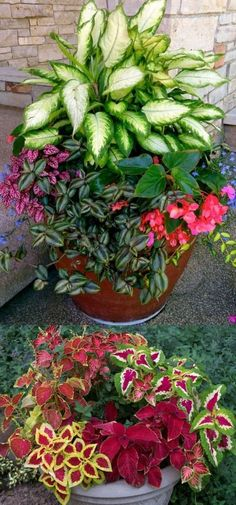 How to create beautiful shade garden pots using easy to grow plants with showy foliage and flowers. And plant lists for all 16 container planting designs! - A Piece Of Rainbow garden 16 Colorful Shade Garden Pots and Plant Lists Container Flowers, Flower Planters, Container Plants, Container Gardening, Flower Pots, Best Plants For Shade, Shade Plants, Shade Perennials, Backyard Shade