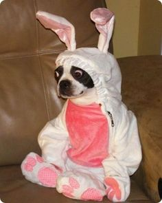 Boston Terrier Costume Rabbit Bunny Pink