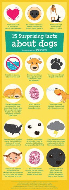 Amazing dog facts that will make you love your pup even more - Infographic, illustration and design made for SheKnows.com #GraphicDesign