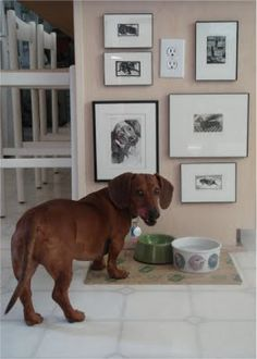 Ha! We have pictures hanging for our wiener dog too.