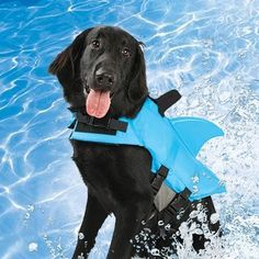 This Shark Finned Dog Life Jacket Lets Your Pet Swim in Sharp Style #dogs trendhunter.com