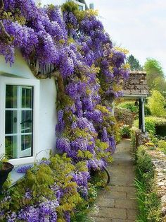 wisteria Garden, ideas. pation, backyard, diy, vegetable, flower, herb, container, pallet, cottage, secret, outdoor, cool, for beginners, indoor, balcony, creative, country, countyard, veggie, cheap, design, lanscape, decking, home, decoration, beautifull, terrace, plants, house.