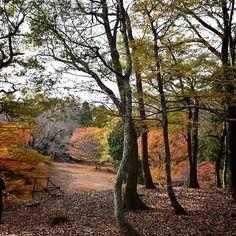 【lucola_march_】さんのInstagramをピンしています。 《* #紅葉 #森 城巡りで山城に行った時のです🏯 山城はほぼ山登り。 苦手ですが、目的あれば何とかなるものでした😅 * 📆201511下旬 * #林 #晩秋 #秋 #秋空 #小谷城 #誰かに見せたい風景 #autumn #Shiga #NikonD5200 #wu_japan #team_jp_#team_jp_東#icu_japan#Lovers_Nippon#IGersJP#jp_gallery#wp_japan#PHOS_JAPAN#bestjapanpics#カメラのキタムラ#東京カメラ部 #9Vaga9#team_jp_flower#lovely_flowergarden#WP_flower#はなまっぷ》