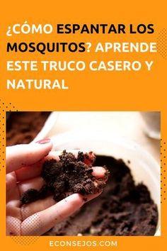 450 Ideas De Antiplagas En 2021 Insecticida Casero Insecticidas Naturales Trucos De Limpieza