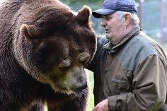 Kuusamon suurpetokeskuksen johtaja Sulo Karjalainen, 75, on karhuilleen isähahmo…