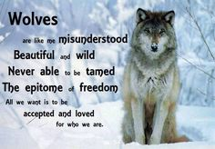The heart of a wolf: beautiful, wild, free