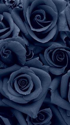 Denim colored rose wallpapers flowers, flower wallpaper ve black wallpaper. Black Wallpaper, Flower Wallpaper, Screen Wallpaper, Beautiful Roses, Beautiful Flowers, Rose Background, Background Images, Flower Backgrounds, Phone Backgrounds