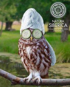 Owl is a very Funny & Cute bird, check out here Funny & Cute Owls new funniest images, pictures & photos. Funny Owls, Funny Cute, Funny Animals, Cute Animals, Hilarious, Wild Animals, Baby Animals, Photoshopped Animals, Funny Photoshop