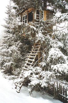 Treehouse with a frosted ladder leading up to it over a fence