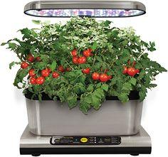 Tolles Einstiegsmodell zu hohem Preis  Garten, Blumen & Pflanzen, Anzuchtsets Kit, Harvest, Gadgets, Gourmet, Growing Weed, Indoor Gardening, Herbs, Gardens, Plants