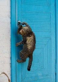 Kitteh opening the door