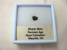 Permian Shark Skin Ossicle #6 $15.00  Product Description Shark Skin Ossicle Permian Age Ryan Formation, Oklahoma Specimen measures approx.  1/4″ long and comes in the 2″ x 2″ Display Box as shown