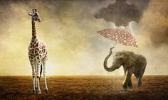 The Sun and The Rain by paulcresswell