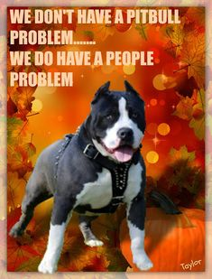Pit-bull Lovers and Advocates - Community - Google  http://www.turmericfordogs.com/blog