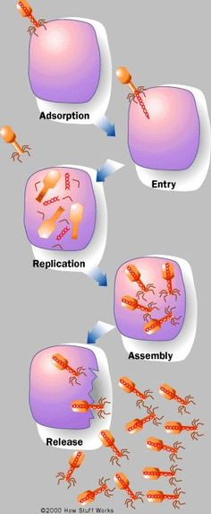 website to use when teaching how viruses invade the body