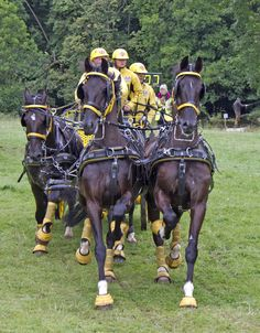 Taken at Lowther Carriage Driving Trials just entering the last hazard of the marathon Horse Harness, Harness Racing, Horse Tack, Big Horses, Horse Carriage, Draft Horses, Horse Drawn, Equine Photography, Horse Pictures