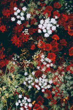 intotheclearing: By Annie Spratt Flor Iphone Wallpaper, Aesthetic Iphone Wallpaper, Flower Wallpaper, Wallpaper Backgrounds, Aesthetic Wallpapers, Flower Aesthetic, Red Aesthetic, Images Esthétiques, Jolie Photo