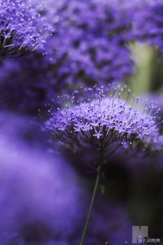Dainty Purple Flowers-Credit/Pinterest
