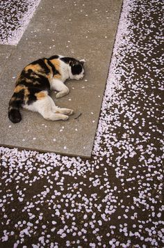 mitlas:今日の猫 (by kumofm)